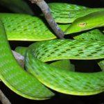 Mơ thấy rắn xanh đánh con gì? Điềm gì?